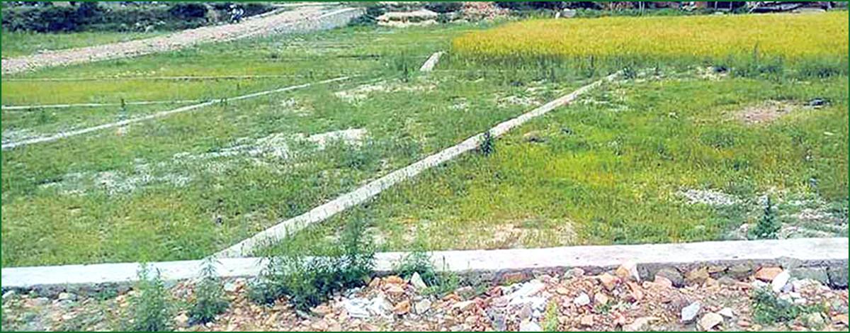 वीरेन्द्रनगरमा जग्गा कित्ताकाट अन्योल